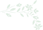 Ramita de jarilla - Arriba transparente