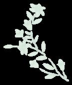 Ramita jarilla - izquierda transparente