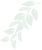 Ramita de café - Derecha transparente